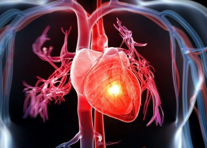 Bài viết giải thích tim nằm bên nào